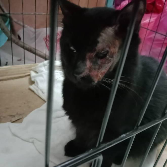 MYIDOL_GLOBAL_COMUUNITY: FREE_BOARD - Poor my cat image 2